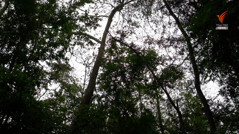 """, จับตาเขื่อนกลางป่าดงพญาเย็น-เขาใหญ่ ไทยเสี่ยงหลุด """"มรดกโลก"""""""