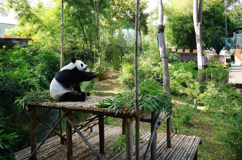 ภาพ : สวนสัตว์เชียงใหม่ Chiang Mai Zoo