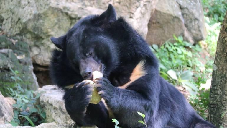 ภาพ:สวนสัตว์เปิดเขาเขียว