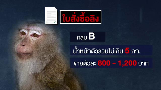 , THE EXIT : แกะรอยค้าลิงข้ามชาติ จ.สุพรรณบุรี ตอน 1