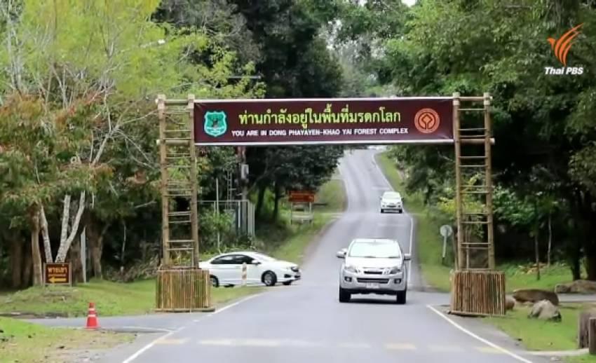 5 พื้นที่เสี่ยงสัตว์ป่าถูกรถชนอยู่ที่ไหนบ้าง?