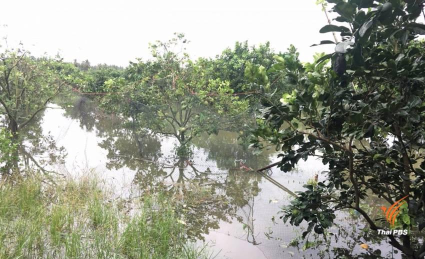 เกษตรกรหวังน้ำท่วมคลี่คลายใน 2 สัปดาห์ หวั่นสวนส้มโอทับทิมสยามเสียหาย