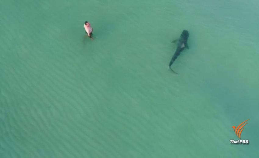 ฉลามว่ายเฉียดคนที่ชายหาดในสหรัฐฯ