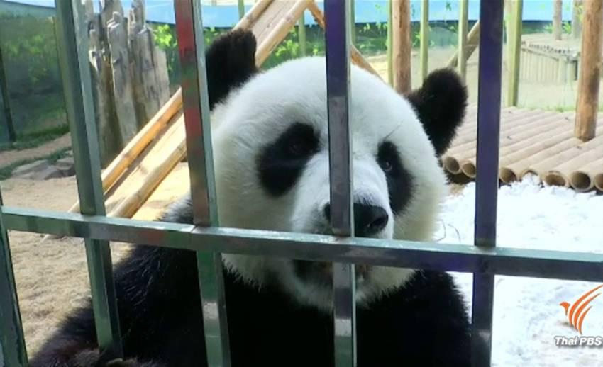 """แพนด้า """"จิน หู"""" ดาวเด่นช่างพูดในสวนสัตว์จีน"""