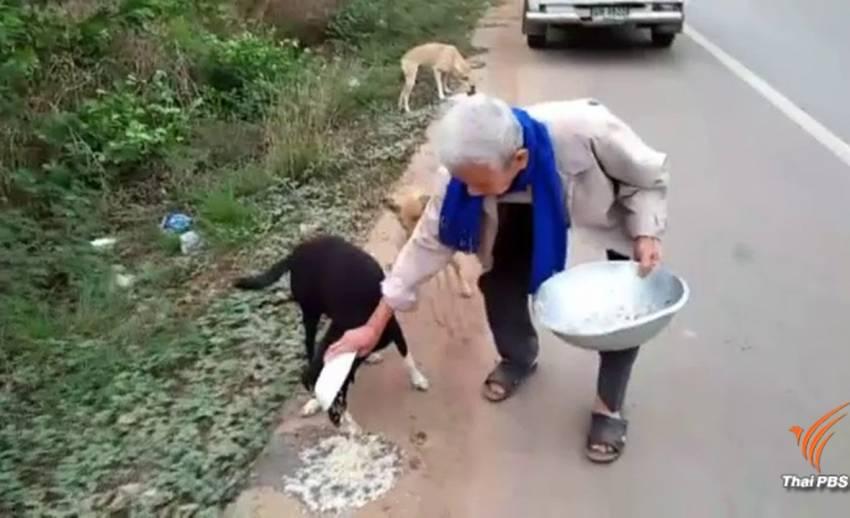 ชื่นชมชายวัย 85 ให้อาหารสุนัขจรจัดทุกวันที่อุดรธานี