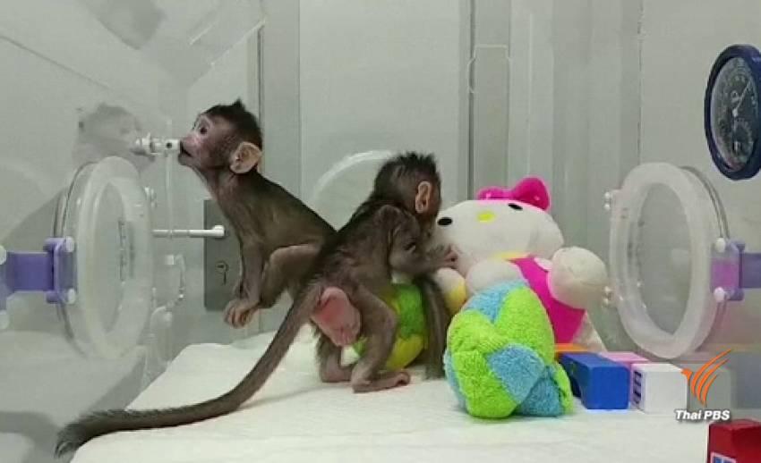 """นักวิทยาศาสตร์จีน """"โคลนนิ่งลิง"""" สำเร็จเป็นครั้งแรก"""