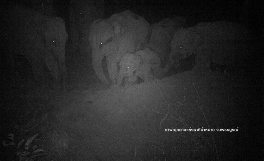 """เปิดภาพครอบครัว""""ช้างป่า""""-สัตว์ป่าหลากชนิดสะท้อนความสมบูรณ์"""