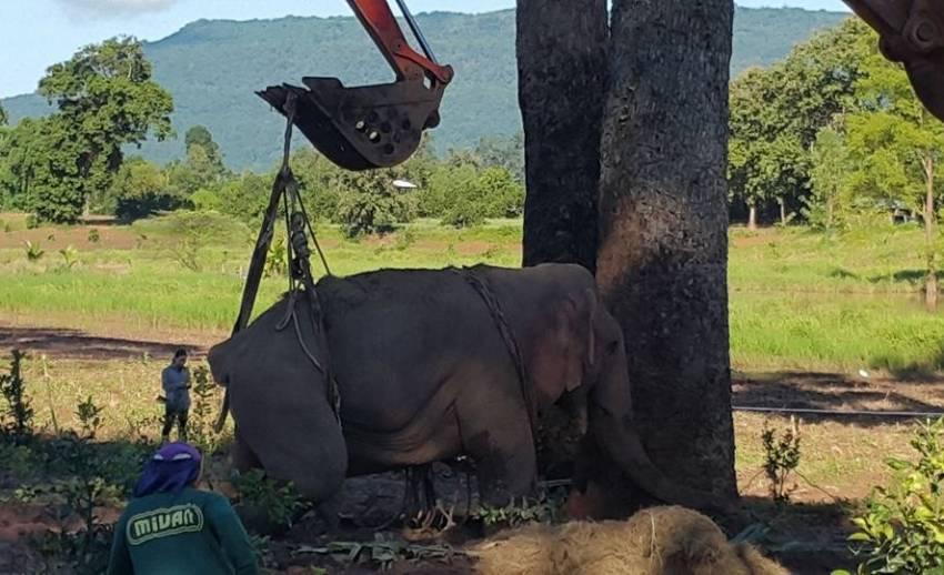 """เอาใจช่วย!! สัตวแพทย์ยอมรับ """"ช้างป่า""""ตกคลองชมพูอาการโคม่า"""