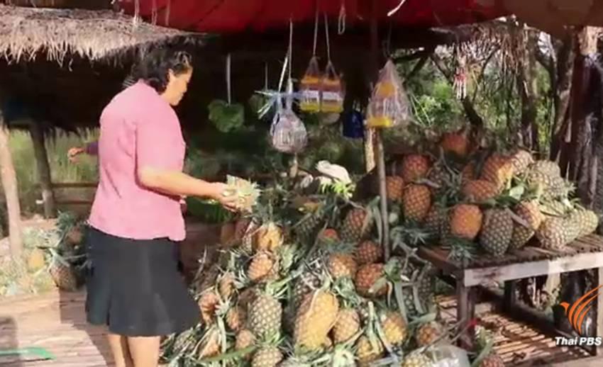 สับปะรดล้นตลาด-ราคาตก เกษตรกรวางขายข้างทางลดขาดทุน