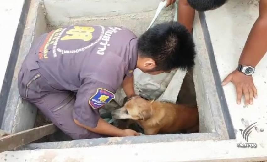 """ภารกิจช่วยชีวิต """"สุนัขติดท่อระบายน้ำ"""""""
