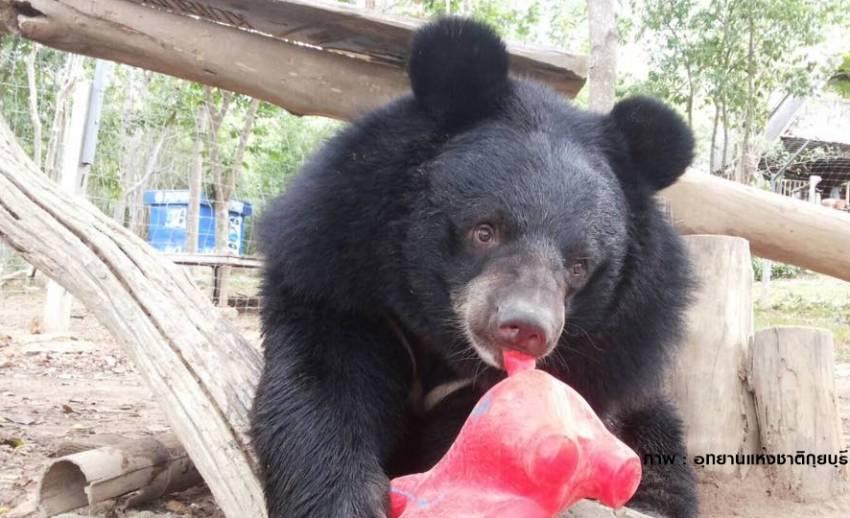 """""""ชาลี ชักกุย"""" หมีควายแสนรู้ขวัญใจนักท่องเที่ยวที่ป่ากุยบุรี"""