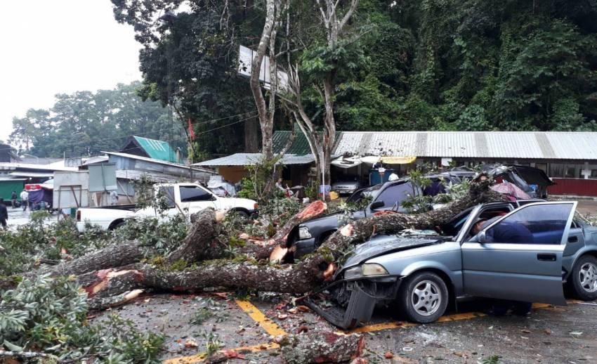 ต้นไม้อายุ 100 ปี ล้มทับรถยนต์ 3 คัน ที่วัดพระธาตุดอยสุเทพ เชียงใหม่