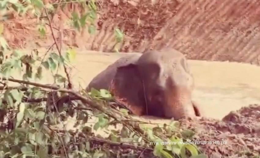 """ความสุข """"เจ้าแก้ว"""" ช้างป่าอินดี้ว่ายน้ำเล่นเหมือนเด็กๆ"""