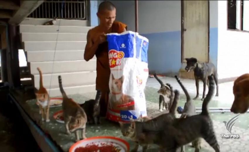 """""""พระใจบุญ"""" เลี้ยงหมา-แมว 40 ชีวิตวอนคนเลิกปล่อยทิ้ง"""