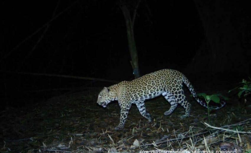 """เปิดภาพสัตว์ป่าหายากในพื้นที่""""สลักพระ"""" กาญจนบุรี"""