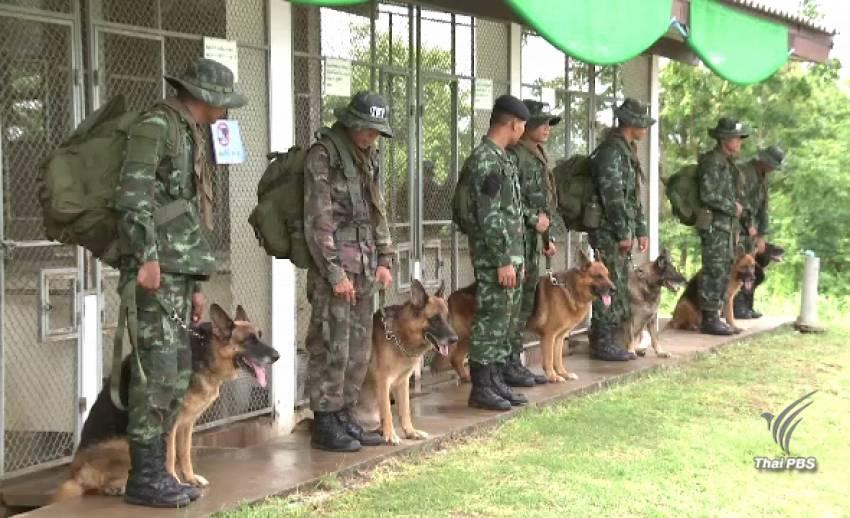 """ภารกิจเพื่อชาติ """"นักรบสี่ขา"""" แห่งกองทัพไทย"""