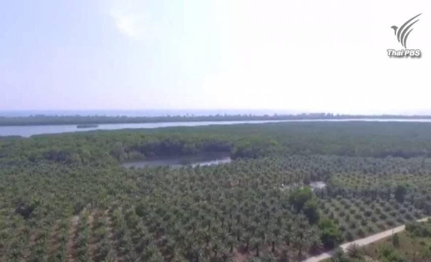ความเห็นต่างใช้พื้นที่ป่า 2,000 ไร่ สร้างสนามบินพังงา