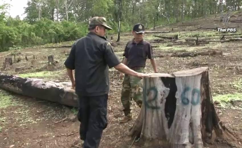 """""""ปลอมเอกสารสิทธิ์""""สวมขึ้นทะเบียนสวนป่ากว่า 300 ไร่ จ.แม่ฮ่องสอน"""