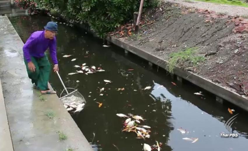 เร่งหาต้นเหตุปลาตาย-น้ำเสียทะลักสวนผลไม้คลองดำเนินสะดวก