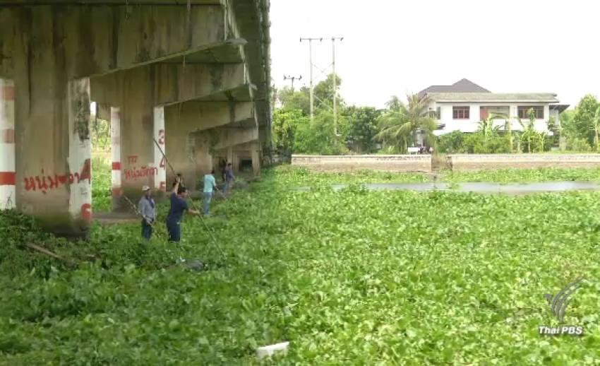 นครปฐมเร่งกำจัดผักตบชวา ลอยติดตอม่อสะพานยาวกว่า 2 กม.