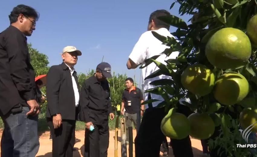ส.ป.ก.สะดุดจัดสรรที่ดินสวนส้ม-เกษตรกร 93 รายอ้างสิทธ์ทำกินก่อนประกาศยึดคืน