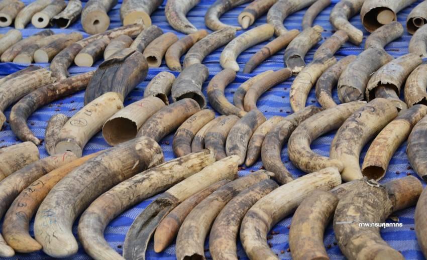 กม.งาช้างบีบต้องรายงานทุกชิ้น ร้านค้าปิดหนีเหลือ 131 ราย