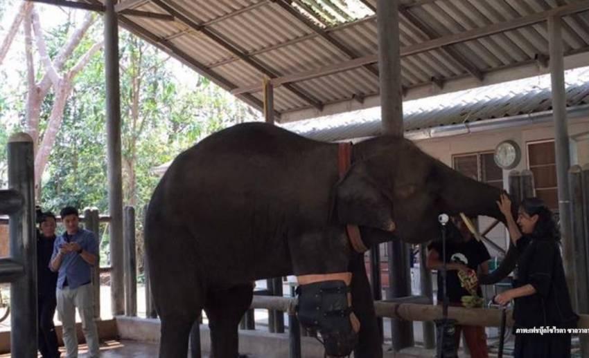"""อนาคต""""พังโมตาลา"""" ในวันปิดตัวมูลนิธิเพื่อนช้าง"""