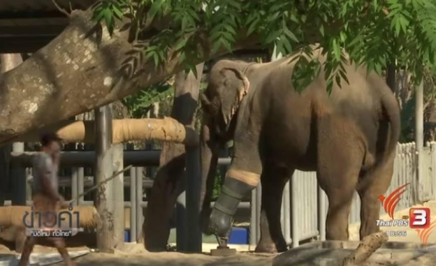 อุทยานฯ-อ.อ.ป.พร้อมรับดูแลช้างบาดเจ็บจากมูลนิธิเพื่อนช้าง