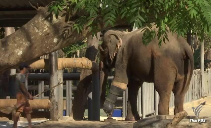 หลายภาคส่วนร่วมบริจาคช่วยเหลือมูลนิธิเพื่อนช้าง
