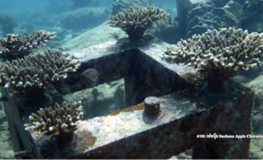 """ตามล่ามือฉก """"ปะการังโต๊ะ"""" สายพันธุ์สู้เอลนิโญ"""