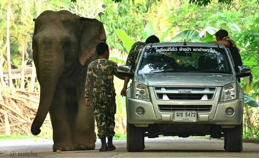 """เรื่องเล่าของ""""เจ้าแก้ว"""" ช้างป่าอินดี้แห่งป่าตะวันออก"""