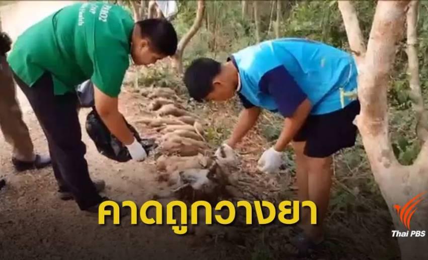 """คาดวางยาเบื่อ """"ลิงแสม"""" ตาย 20 ตัว เหตุกินพืชผลชาวบ้านเสียหาย"""