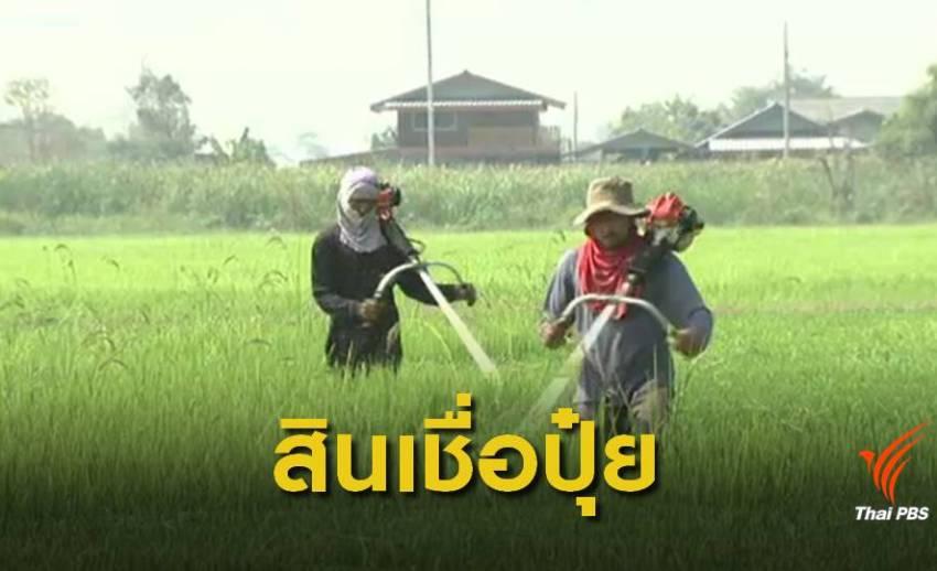 """ชง ครม.เสนอ """"ปุ๋ยประชารัฐ""""ลดราคา 30 % เอาใจเกษตรกร"""