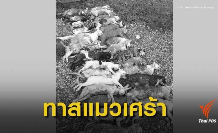สลด ! แอบปล่อยแมวทิ้งในวัดถูกหมากัดตาย 33 ตัว