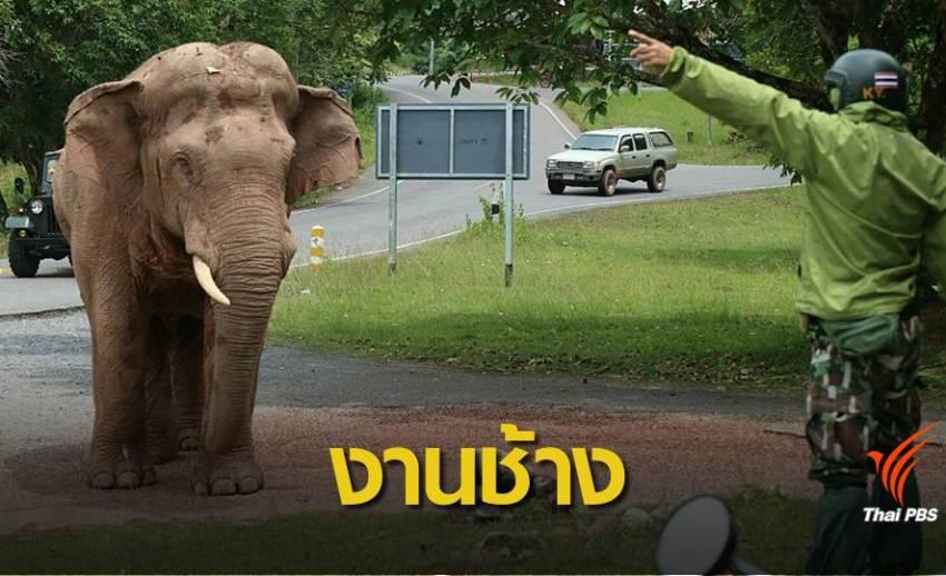 """ภารกิจพิทักษ์ """"ช้าง"""" กลางเขาใหญ่"""