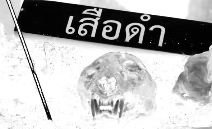 ข่าวเด่น 2561 : คดีเสือดำ สู่ คดีหมีขอ