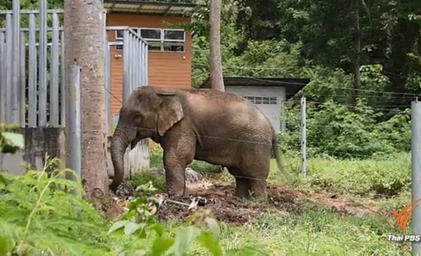 ข่าวเด่น 2561 : ช้างป่ากับความเดือดร้อนของชุมชนใกล้ป่า