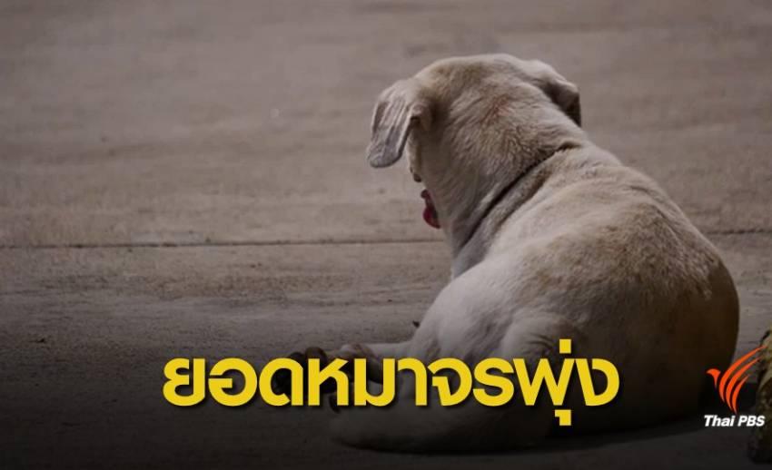 คาด 20 ปีหมา-แมวจรจัดพุ่ง 5 ล้านตัว เร่งทบทวนขึ้นทะเบียน