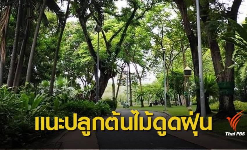 ต้นไม้ดูดฝุ่น! นักวิชาการแนะเพิ่มพื้นที่สีเขียวแก้ฝุ่นพิษระยะยาว