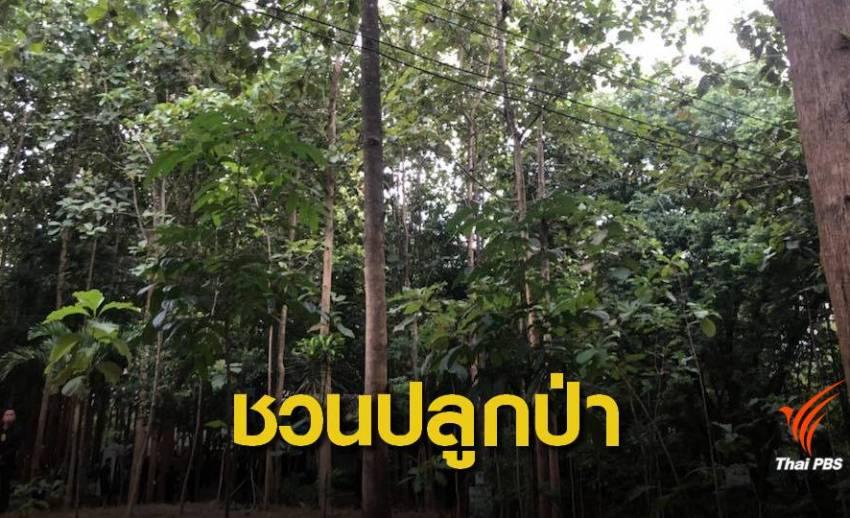 """""""ประยุทธ์"""" ชวนปลูกไม้ขายครัวเรือนละ 400 ต้น"""