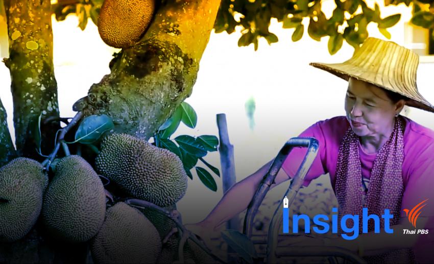 Insight : ประกันภัยพืชผล ช่วยรัฐลดงบเยียวยา-เกษตรกรได้คุ้มเสีย