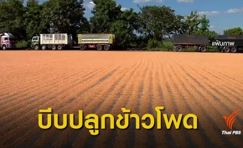 ก.เกษตรฯ บีบสหกรณ์เพิ่มโควต้าปลูกข้าวโพด
