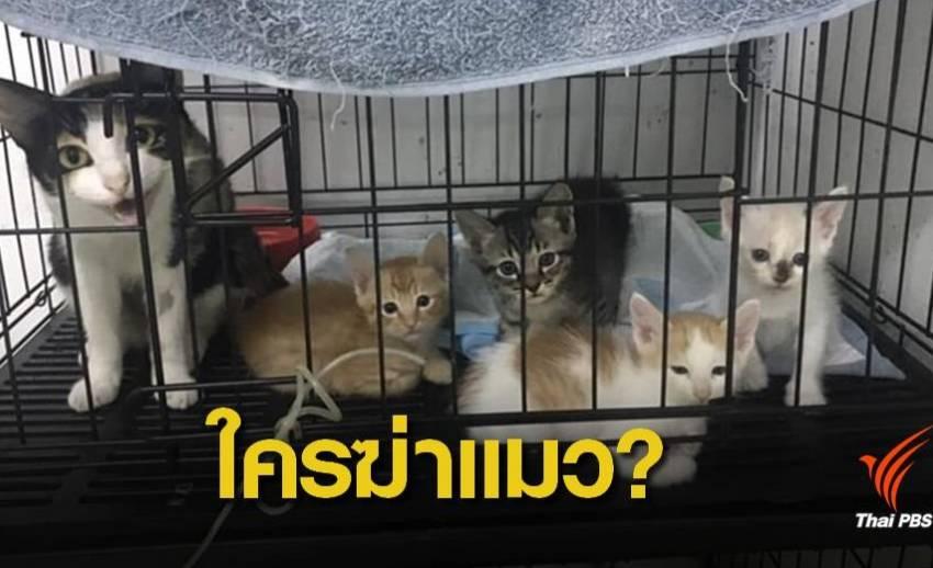 ข้อกฎหมายไม่ชัด ยังไม่แจ้งความใครฆ่าแมว?