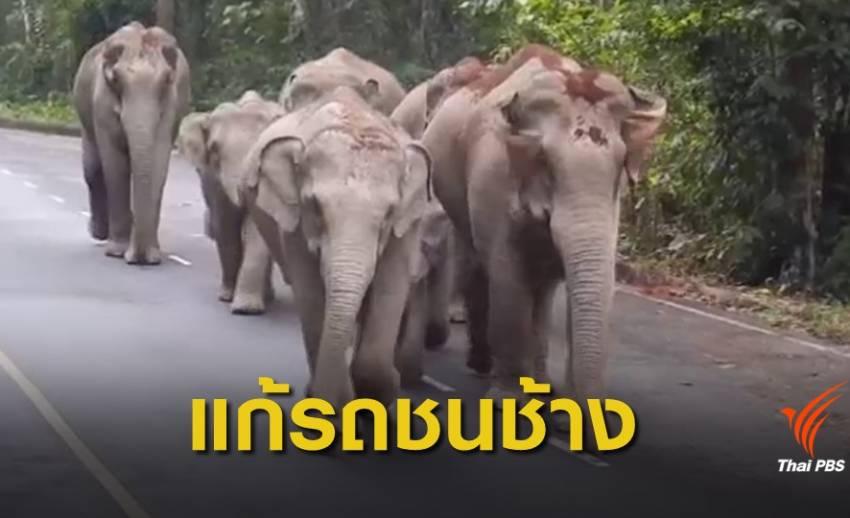 เตรียมย้ายช้างพ้นถนนสาย 3076 จ.ฉะเชิงเทรา