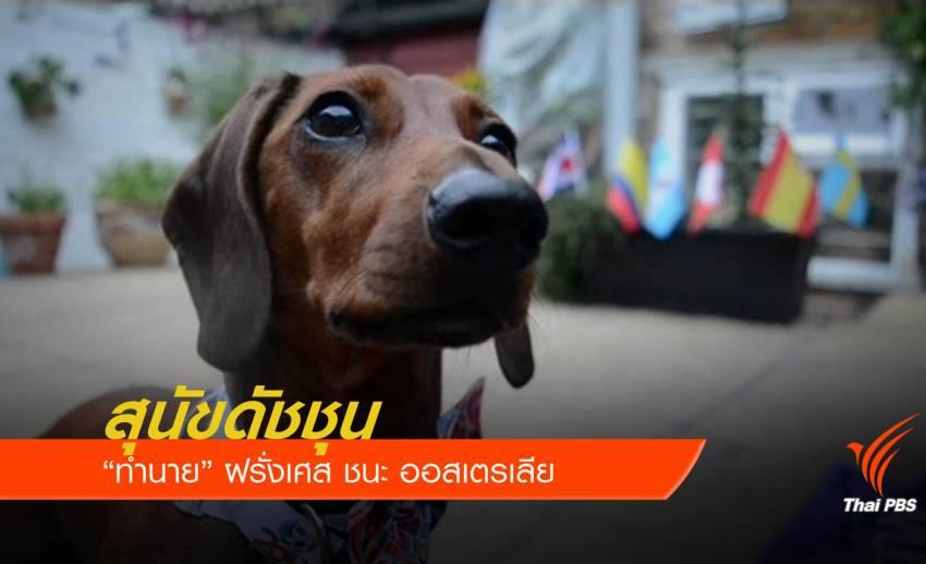 """สุนัขดัชชุน กินอาหารท้องถิ่น """"ทำนาย"""" ฝรั่งเศส ชนะ ออสเตรเลีย"""