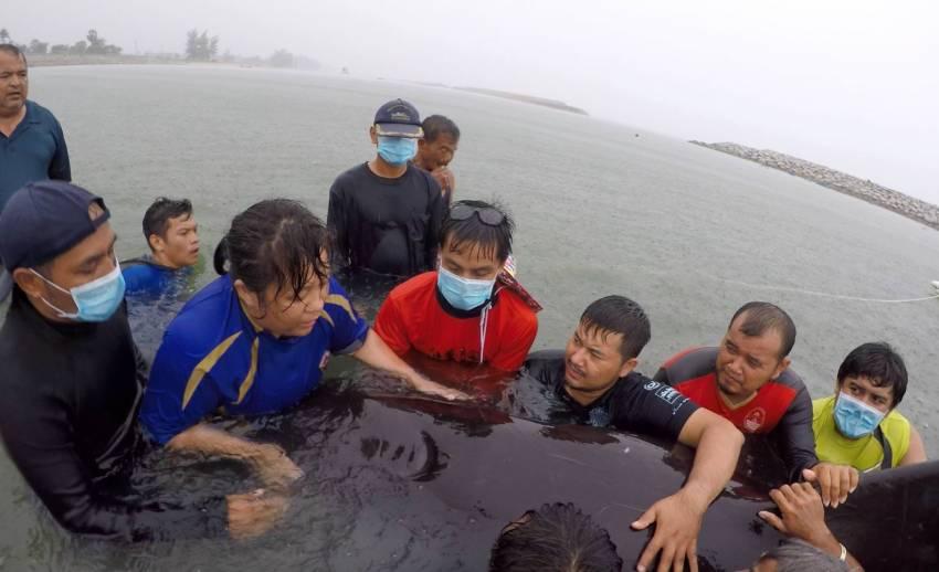 """เศร้า! วาฬนำร่องครีบสั้นตายอีก 1 ตัวเจอ """"ถุงพลาสติก 85 ชิ้น"""""""