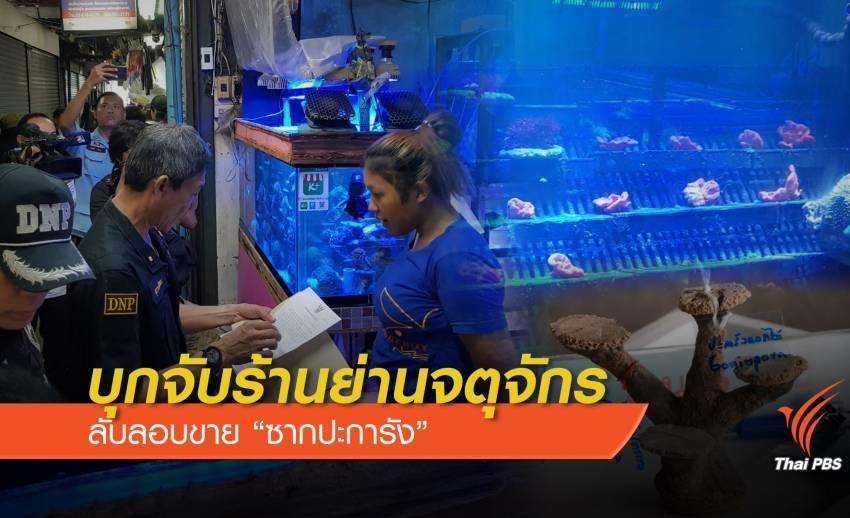 """บุกจับร้านย่านจตุจักรแอบขาย """"ซากปะการัง -กัลปังหา"""""""