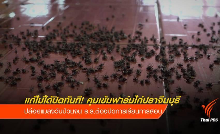 กองทัพแมลงวันป่วน ร.ร. คุมเข้มฟาร์มไก่ปราจีนบุรี แก้ไม่ได้ปิดทันที!