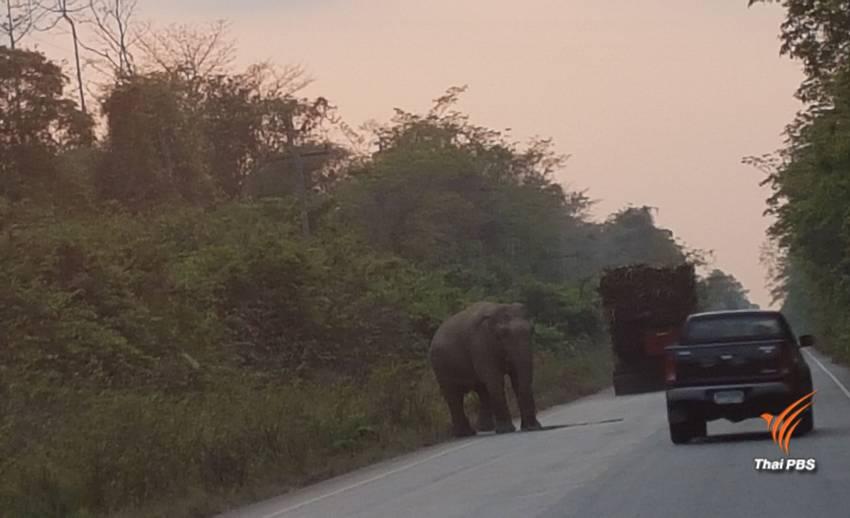 """คาด 1 ปี  """"ปิดถนน"""" สาย 3076 ผ่าป่าเขาอ่างฤาไนแก้สัตว์ถูกรถชน"""