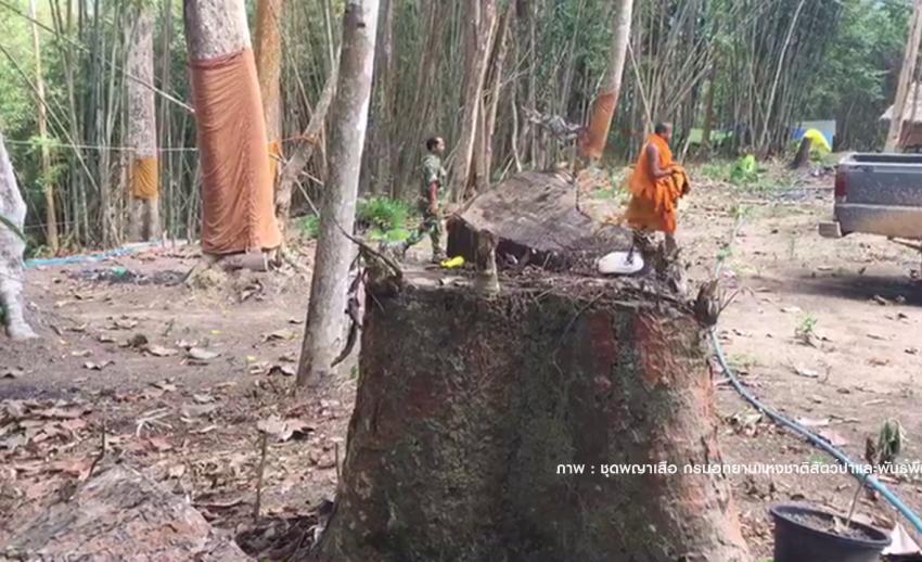 ทวงคืนป่าต้นน้ำกรมหลวงชุมพร 21,000 ไร่